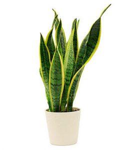 Besten Pflanzen für das Schlafzimmer - Matratzen.info ...