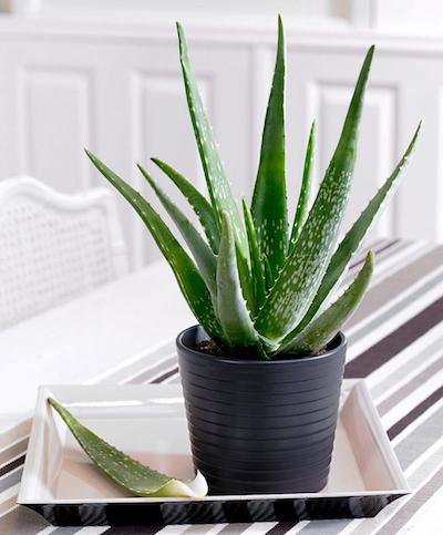 Besten Pflanzen für das Schlafzimmer - Matratzen.info Testberichte
