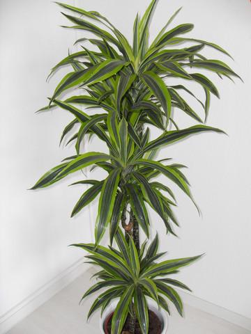 Besten Pflanzen Fur Das Schlafzimmer Matratzen Info Testberichte